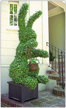 The word topiary is not common among many people. It is simply a way to give proper shape to the hedges and trim them in a perfect manner. This art of giving proper shape to the hedges is quite popular in all over the world. Beautiful Gardens, Beautiful Flowers, Rabbit Garden, Easter Garden, Topiary Garden, Bunny Art, Gras, Hedges, Yard Art