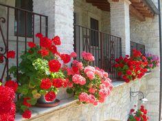 Balcone camera tripla Pegaso www.borgosanmartino.eu Garden, Plants, Garten, Lawn And Garden, Gardens, Plant, Gardening, Outdoor, Yard
