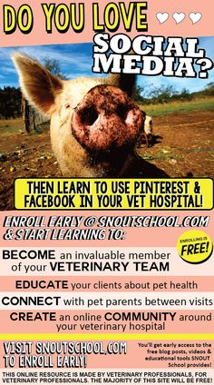 Learn more at www.snoutschool.com - enroll now to combine your love of being a #veterinarian or #vettech with the awesome world of social media!