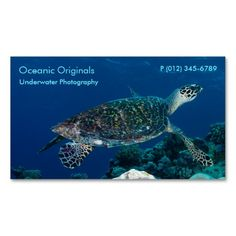 This unusual business card features a Hawksbill Sea Turtle swimming in the crystal blue waters of the Coral Sea on Australia's Great Barrier Reef. The template design allows you to easily customize any text on the card to suit your requirements. #turtle #turtles #hawksbill #ocean #sea #nature #wildlife #seaturtle #hawksbillseaturtle