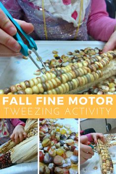 This preschool fall fine motor tweezing corn activity is always a hit with our students. A fun independent idea for your activity table! But what is done with the kernels. Harvest Activities, Fall Preschool Activities, Thanksgiving Crafts For Kids, Stem Activities, Toddler Activities, Corn Thanksgiving, Preschool Plans, September Activities, November Crafts