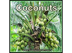 COCONUTS AND ACTIVATED CHARCOAL – THE NATURAL TOXIN MAGNET