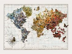 Butterfly migration Vintage Wall Map