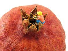 Trimming the Pom | Flickr - Fotosharing!