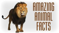 25 Amazing Facts You Didn't Know About Animals | Videos Hub