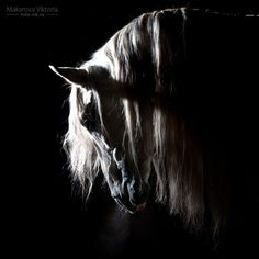 This is probably the most exquitite horse photo. It demonstrates such dramatic contrast, signifying streath, power, beauty, wisdom and loyality. Which encompasses all the virtues every horse carries within.