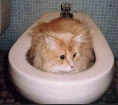 A kitty hidding in a bidet.  Hahaha oh cats.
