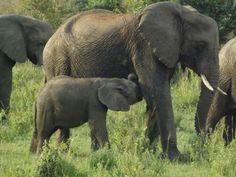 Ultimate Wildlife Places to visit in Kenya