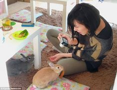 All ears: A diner plays with bunnies at Tokyo'sBunny Cafe, which offers customers dining with a difference