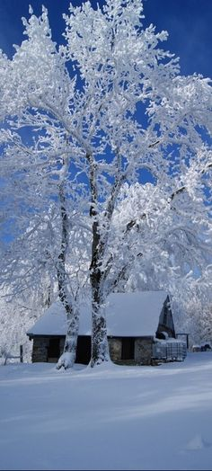 Winters Snow - The beauty of winters shared moments - from Beautiful Mother Nature