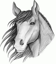 How to sketch a Horse