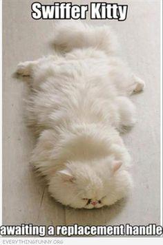 Swiffer Kitty