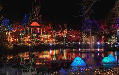 Vancouver's VanDusen Botanical Garden is worth seeing any time of the year, but especially during the Festival of Lights at Christmas time in December. Christmas Lights, Christmas Time, Canada Holiday, Festival Lights, Vancouver, Time Of The Year, Botanical Gardens, Attraction, Around The Worlds