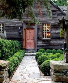 Boxwood and dark house.