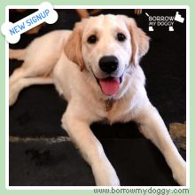 New sign-up – Molly the Golden Retriever! She is adorable and loving ☺ She has endless energy and loves to play till she drops!