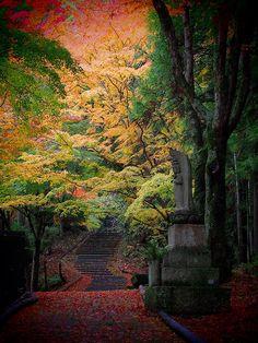 inhasa:    Gradation by Matsuura on Flickr.
