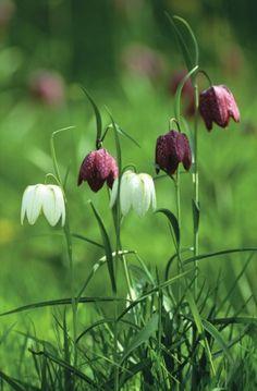 A spring wild flower adventure