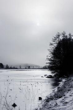 Fine Art Print • Photo Print • Winter • Snow • Ice • Forest • Tree • Photo by EGON GADE ARTWORK on http://www.egongadeartwork.com