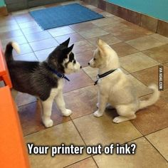 Hey I just met you...and we're so furry. @9gagmobile #9gag #husky #huskypuppy #L4L #funny #instafollow