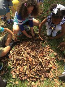 Myers' Kindergarten: Inquiring About Leaves Four Seasons, Curriculum, Kindergarten, Leaves, Dance, Education, Fall, Resume, Dancing