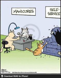 My cats liked the self service! Cute Cats, Funny Cats, Funny Animals, Cute Animals, Silly Cats, Funny Humor, Cat Fun, Bad Cats, Memes Humor