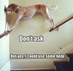 "don't ask.. ok .... but the ""help"" is kinda a given"