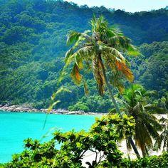 #palms #trees #tree #coconut #redangisland #redang #malaisie #arbre #dc #david #ile #beautiful #green #chinasea #sea #mer #eau #vacances #instamalaysia #instalandscape #paysage #payjage