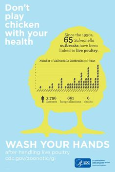 Infographic: Don't play chicken with your health. Since the 53 salmonella outbreaks have been linked to live poultry - illnesses, 387 hospitalizations and 5 deaths. Backyard Poultry, Chickens Backyard, Live Poultry, Poultry Diseases, Agriculture Facts, Broiler Chicken, Aesthetic Fonts, Healthy Pets, Raising Chickens