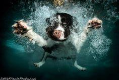 Photographer Seth Casteel | Underwater Dogs