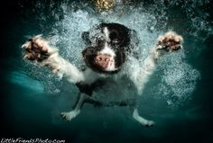 Stunning Photos of Pups Swimming From An Underwater View: Must See Photography From Seth Casteel