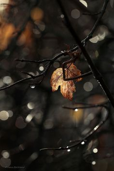 Leaf by Bertrand Hans