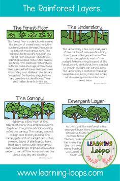 Rainforest Facts For Kids, Amazon Rainforest Facts, Rainforest Preschool, Rainforest Ecosystem, Rainforest Crafts, Rainforest Project, Rainforest Habitat, Rainforest Theme, Rainforest Animals