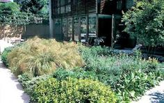 Low-maintenance plants for your garden