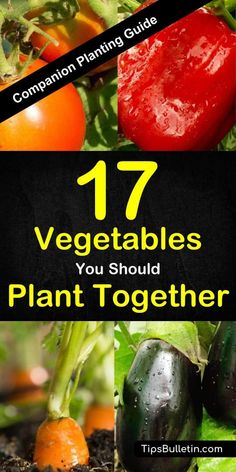 Companion planting guide for 17 different vegetables and its combinations Covering peppers squash tomatoes zucchini broccoli cucumbers garlic and more With detailed explanation what vegetables plant together in your garden or in containers # Companion Planting Guide, Vegetable Planting Guide, Vegetable Garden Design, Planting Vegetables, Tomato Companion Plants, Companion Plants For Peppers, Fast Growing Vegetables, Vegetable Garden In Containers, Edible Garden