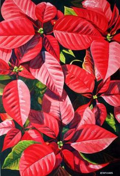 Flower Paintings - Red Poinsettia - Watercolour