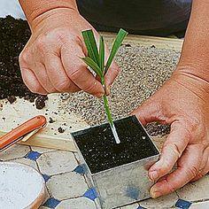 Calendrier des boutures des fleurs et arbustes d'ornements - Bouturer le…