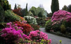 Leonardslee Gardens, West Sussex, England | Awesome Colors of Leonardslee Rock Garden with flowering Japanese azaleas and miniature rhododendrons in May (11of 14)