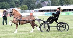 Photo Archive Royal Welsh Show Driving - Wagons-Sec C 2013 : Rainhill Welsh Cobs