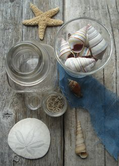 Sea shells on weathered wood. Photo and styling by Robin Zachary