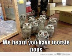 We heard you have Tootsie Pops - Funny and cute owls looking at you with their big eyes like wanting a lollipop candy.