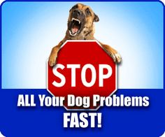 Secret Dog Training Tips revealed. See why most to dog training tips just DON'T WORK, discover the natural dog training to train your dog in extra fast time Online Dog Training, Agility Training For Dogs, Dog Training Methods, Dog Agility, Training Your Dog, Brain Training, Best Dog Food, Best Dogs, Rottweiler Training