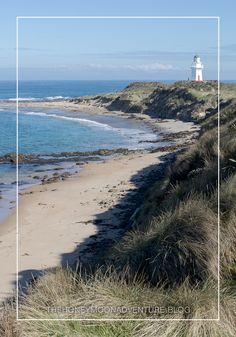 Beim Waipapa Point Lighthouse gibt es nicht nur den Leuchtturm zu entdecken sondern dort leben auch einige Seelöwen. Im Blogpost des Southern Scenic Highways erfahrt ihr mehr über die Südküste Neuseelands. New Zealand, Beach, Water, Outdoor, Lighthouse, Explore, Travel, Gripe Water, Outdoors