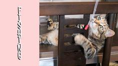 Funny Cats Vlog 45 - Fishing a Cat