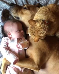 Cute baby animals, animals and pets, cute funny animals, image chat, Cute Funny Animals, Cute Baby Animals, Funny Cute, Funny Dogs, Cute Cats, Super Funny, Cute Puppy Videos, Cute Animal Videos, Animals For Kids