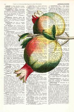 Pomegranate Wall decor giclee art print Wall art by PRRINT