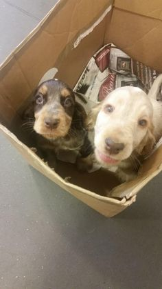 Went to the vets for flea drops and nearly left with a puppy... http://ift.tt/2qRvfi7