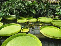 Kew Gardens (London) – Nur Gärtnern …