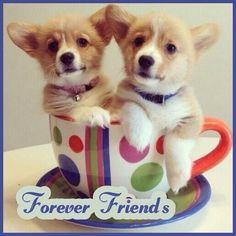 Cup of coffee. I mean cup of corgi. Cute Corgi Puppy, Corgi Funny, Corgi Dog, Cute Puppies, Pet Dogs, Dogs And Puppies, Baby Corgi, Weiner Dogs, Dachshund Puppies