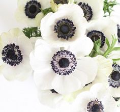 . Dark Flowers, Love Flowers, Fresh Flowers, Wedding Flowers, White Anemone, Outdoor Wedding Decorations, Peony Flower, Flower Pictures, Pink Peonies