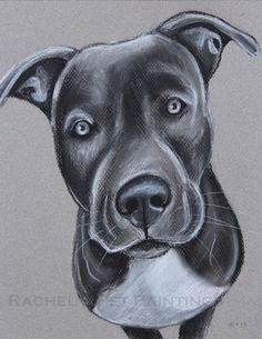 Pit Bull Drawing , Limited Edition Print of Original Charcoal Drawing , Dog Art Print , Animal Wall Art
